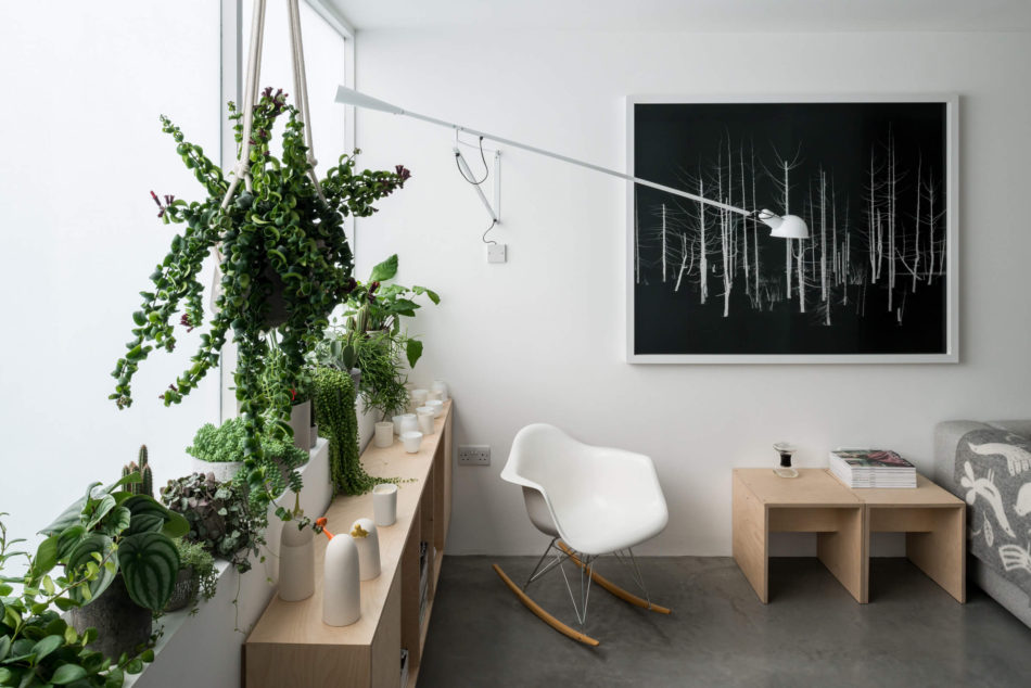 Green House: interior design plants at home