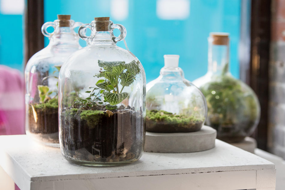 London Terrariums The Modern House A To Z Of Modern Design