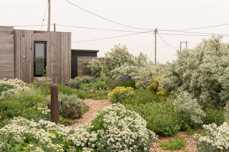 Fiona's garden in Dungeness
