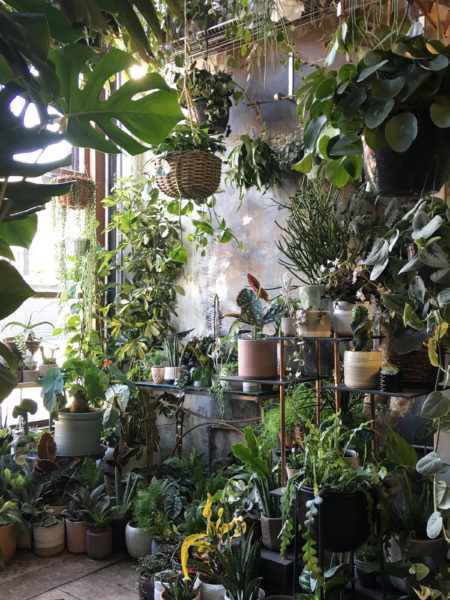 The best Instagram accounts for plant inspiration