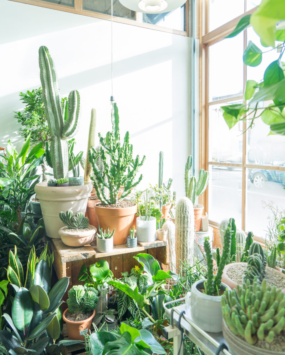The best plant and garden Instagram accounts to follow now Urbanjungleblog